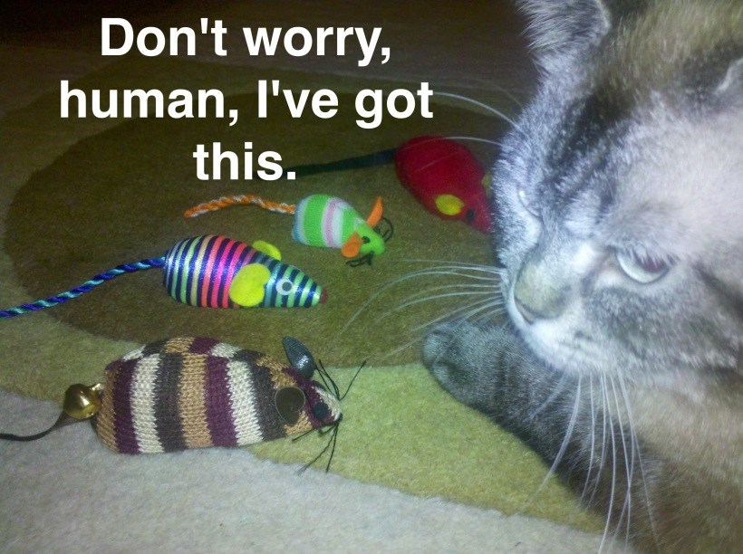 Don't worry, human.